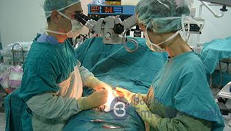 Dondurulmuş testis ve ejakülat spermlerin çözme sonrası canlılığı