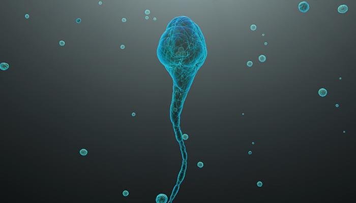 Kök hücreden sperm !